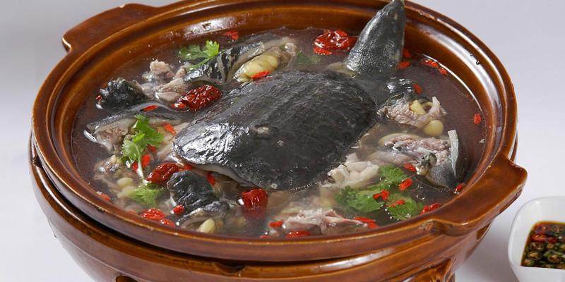 章丘区营养甲鱼汤